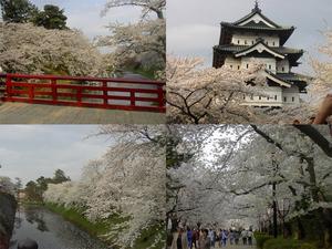 4月末の弘前城